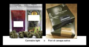 scegli l'inflorescenza di cannabis sativa legale ad alto CBD - Torino Inflorescenze